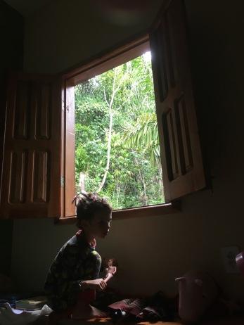 Window on the jungle...