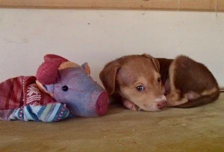 Gigi & Cachorro